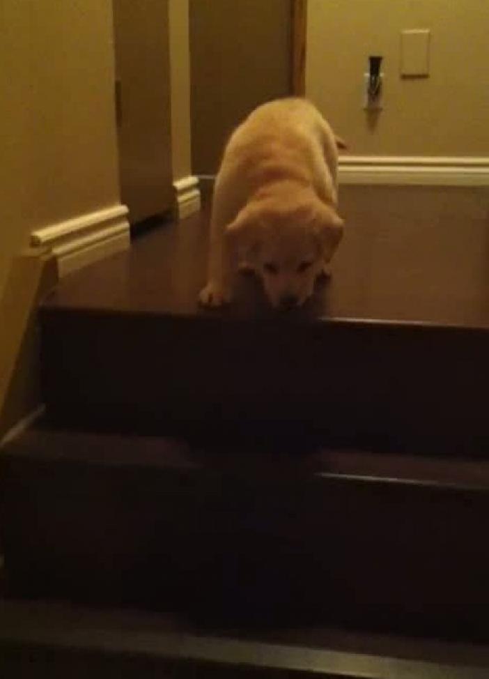 Zijn de traptreden te glad voor je puppy hond - Hoe een trap te kleden ...